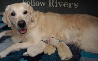 Pups zijn geboren